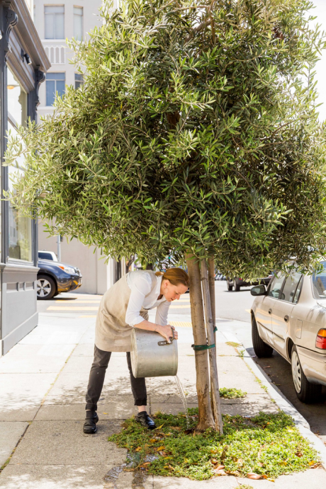 The chef Melissa Perello douses an olive tree with used cooking water outside Octavia, her new restaurant in San Francisco. Credit Jason Henry for The New York Times